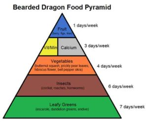 Bearded Dragon Diet Guide