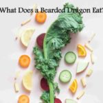 Bearded Dragons Vegetables
