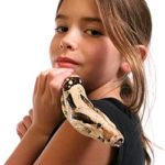 Best Snakes For a Beginner