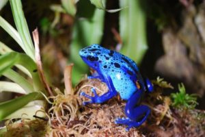 Poison-Dart-Frog-Care-Sheet