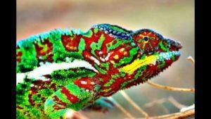 What are Chameleons
