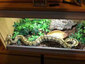 good ball python enclosure